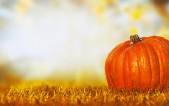 Partner-Webwatch: Monatsrückblick Oktober